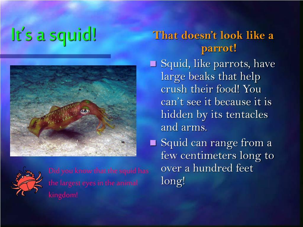 It's a squid!