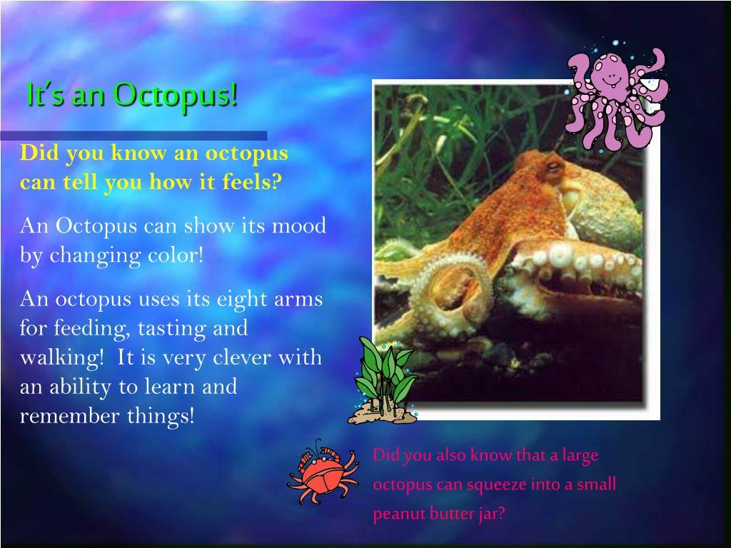 It's an Octopus!