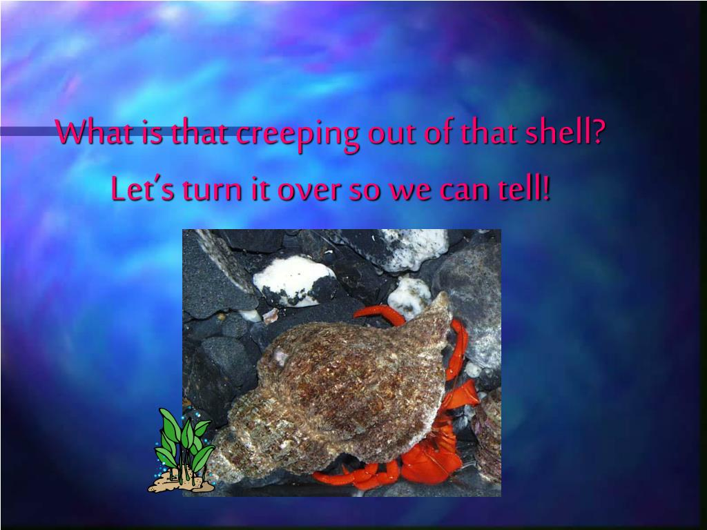 What is that creeping out of that shell? Let's turn it over so we can tell!