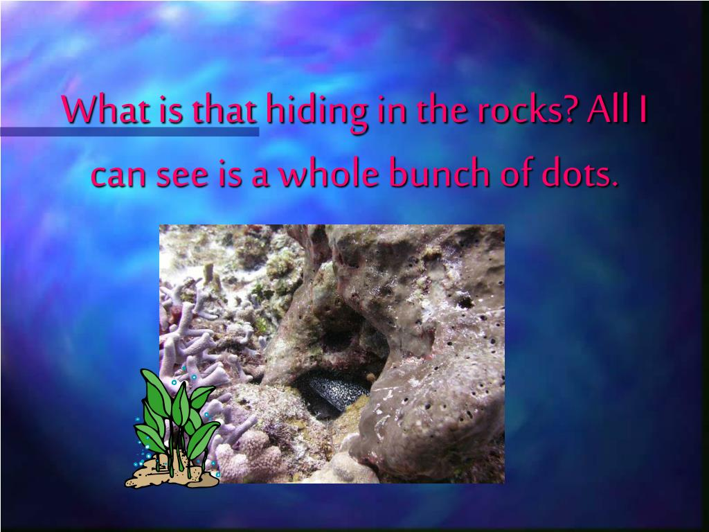 What is that hiding in the rocks? All I can see is a whole bunch of dots.
