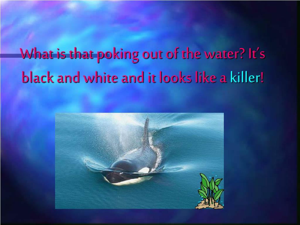 What is that poking out of the water? It's black and white and it looks like a