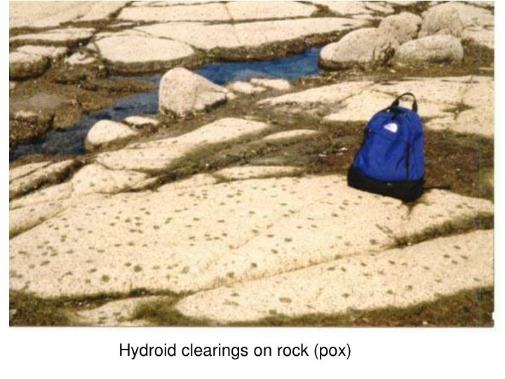 Hydroid clearings on rock (pox)