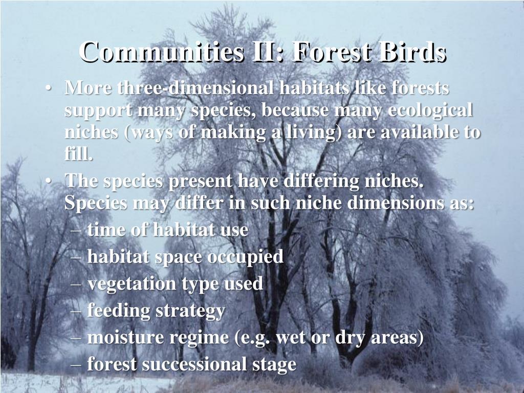 Communities II: Forest Birds