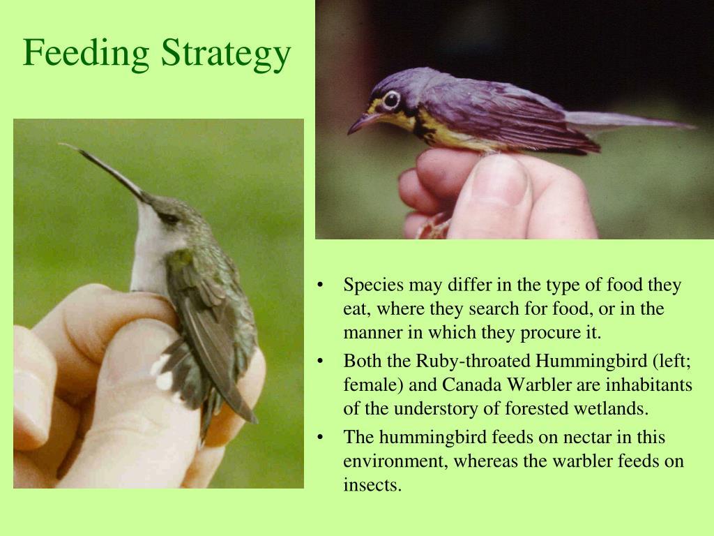 Feeding Strategy