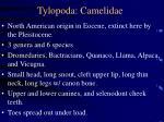 tylopoda camelidae