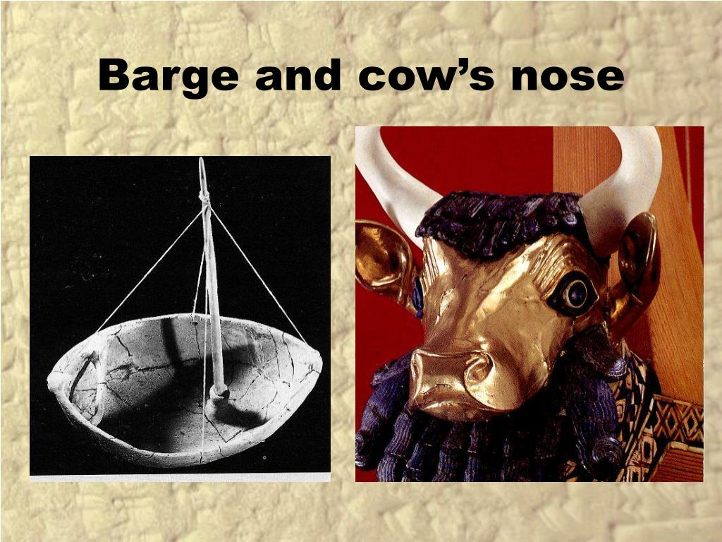 Barge and cow's nose