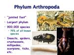 phylum arthropoda2