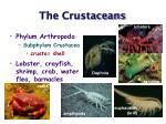 the crustaceans