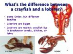 what s the difference between a crayfish and a lobster
