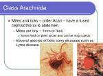 class arachnida31