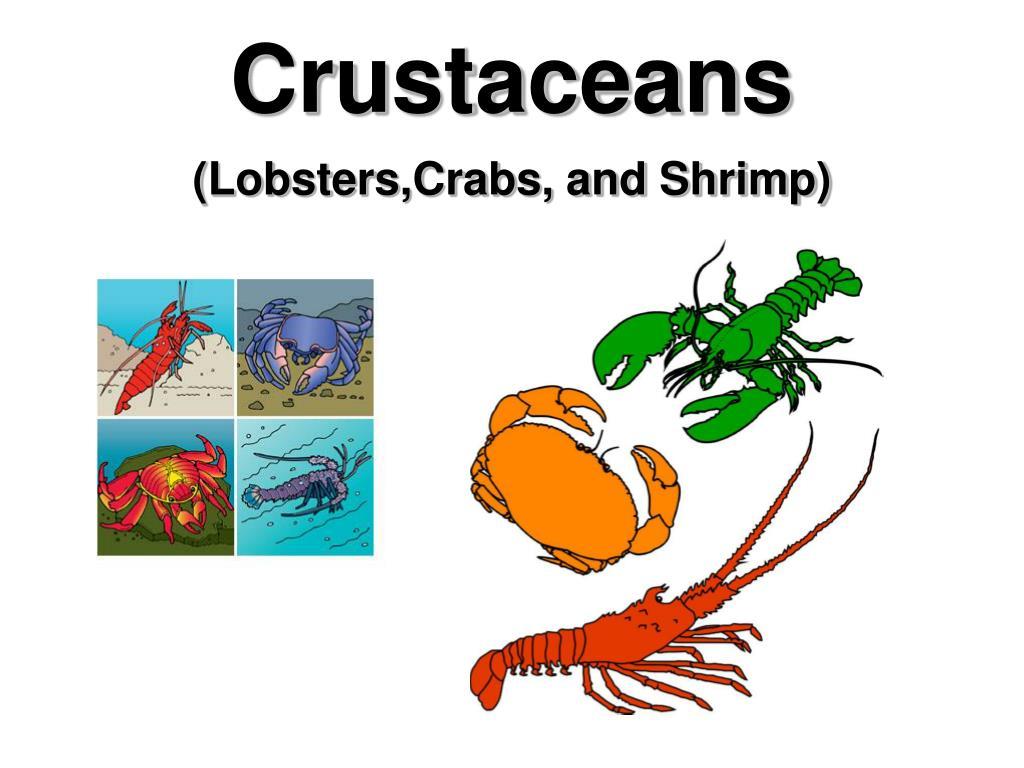 crustaceans l.