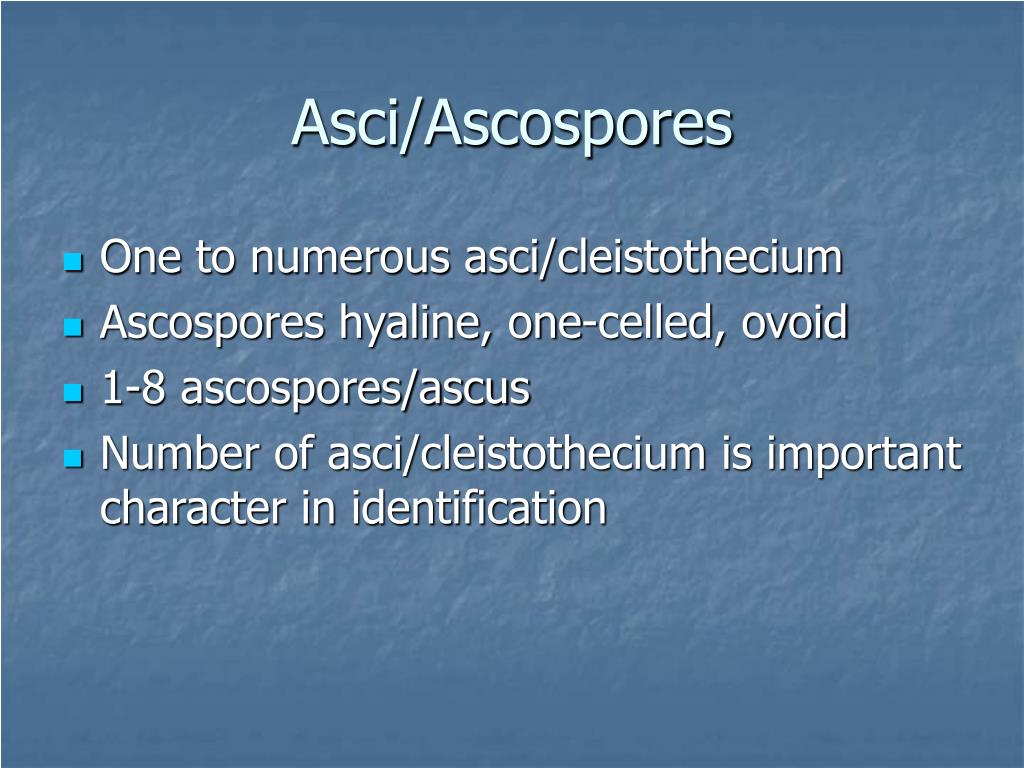 Asci/Ascospores