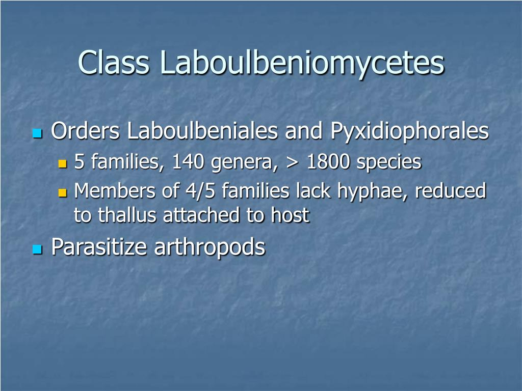 Class Laboulbeniomycetes