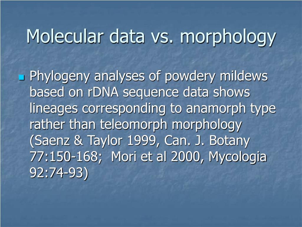 Molecular data vs. morphology
