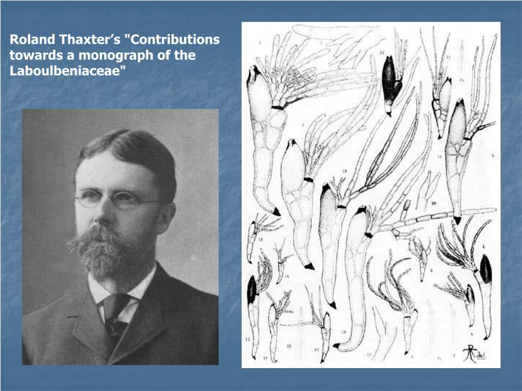 """Roland Thaxter's """"Contributions towards a monograph of the Laboulbeniaceae"""""""
