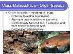 class malacostraca order isopoda