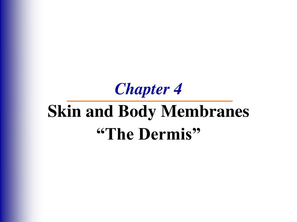chapter 4 skin and body membranes the dermis l.