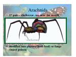 arachnids28