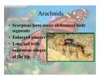 arachnids33
