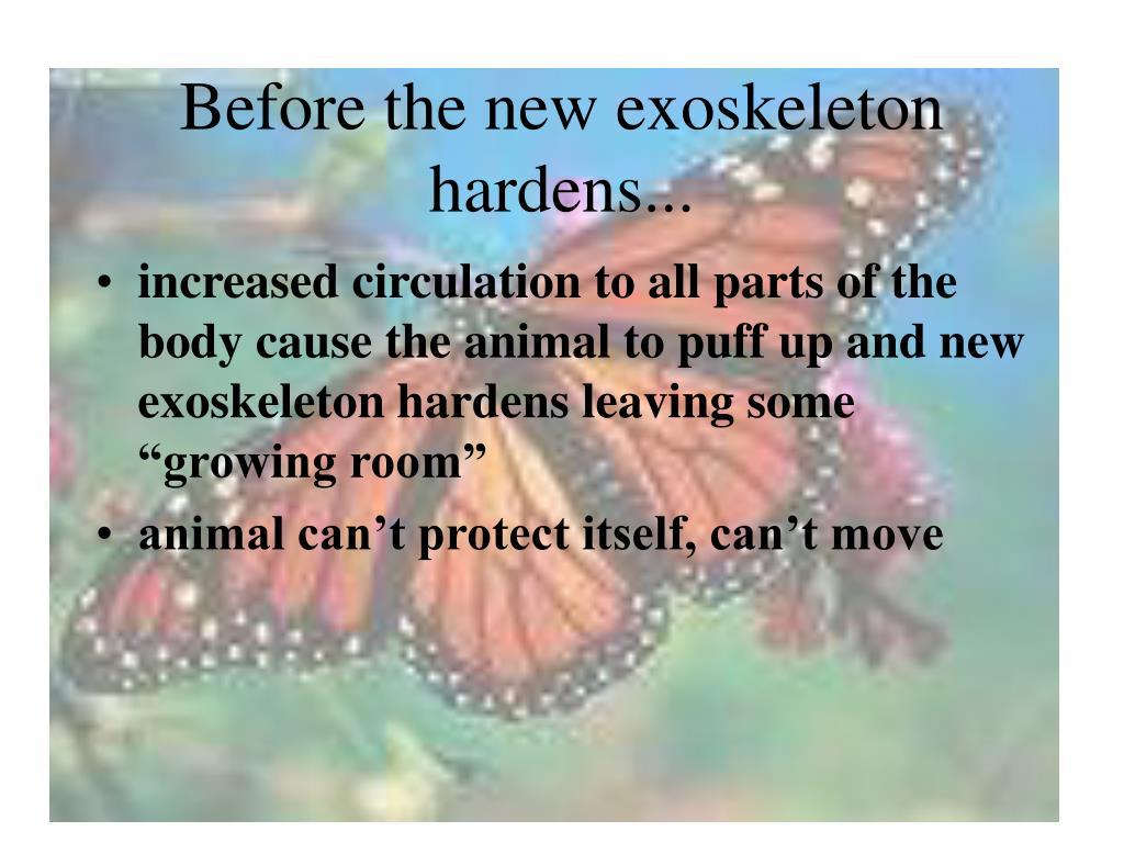 Before the new exoskeleton hardens...