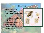 insecta43