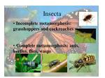 insecta44
