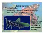 respiration18