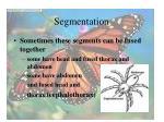 segmentation15