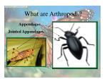 what are arthropods4