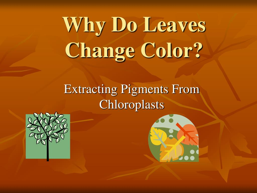 why do leaves change color l.