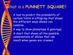 what is a punnett square29