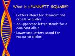 what is a punnett square30