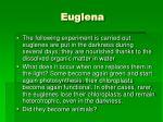 euglena12