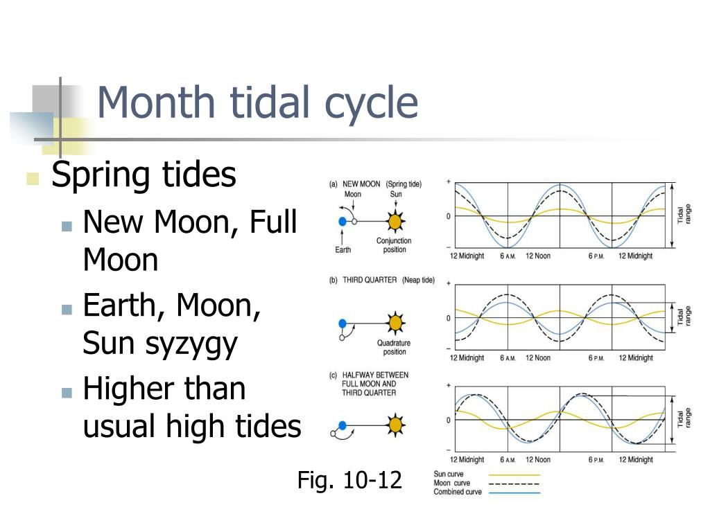 Month tidal cycle