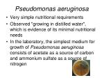pseudomonas aeruginosa10