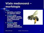 v ela medonosn morfologie18