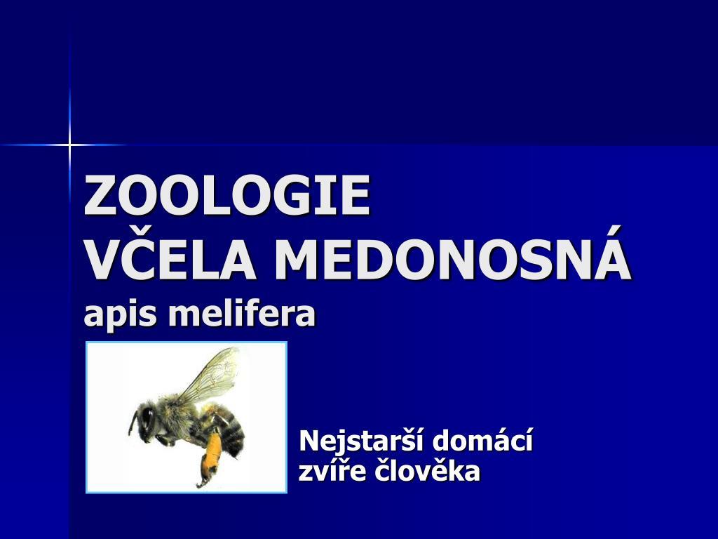 zoologie v ela medonosn apis melifera l.