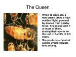 the queen37