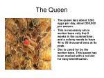 the queen38