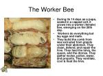 the worker bee