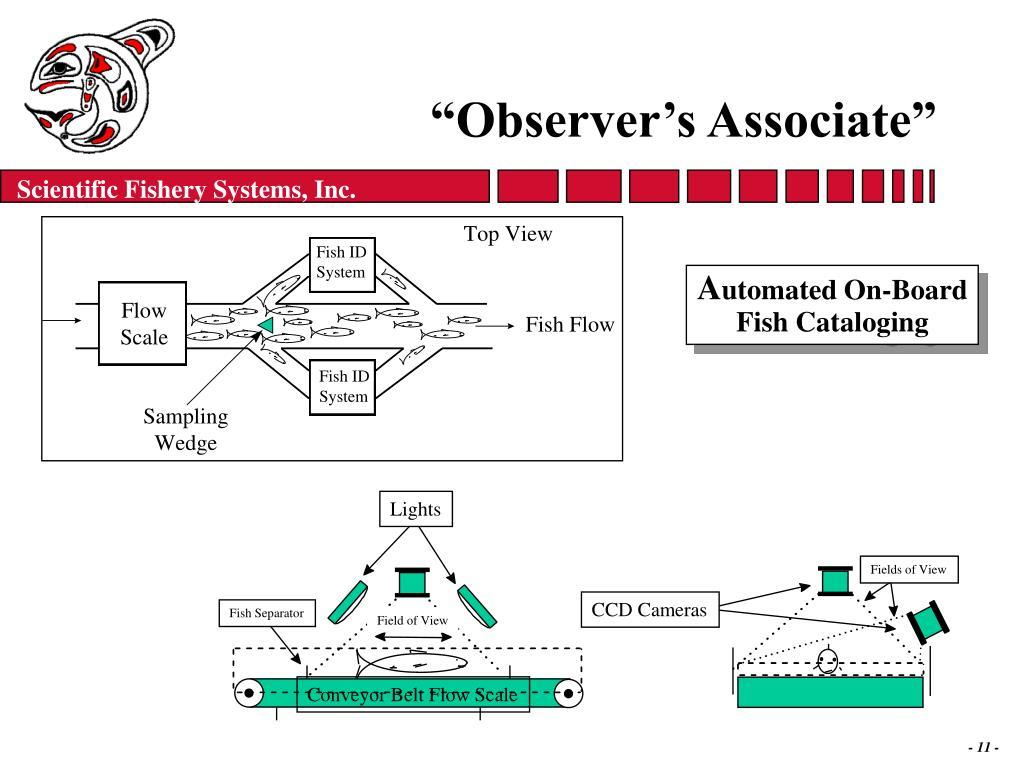 """""""Observer's Associate"""""""