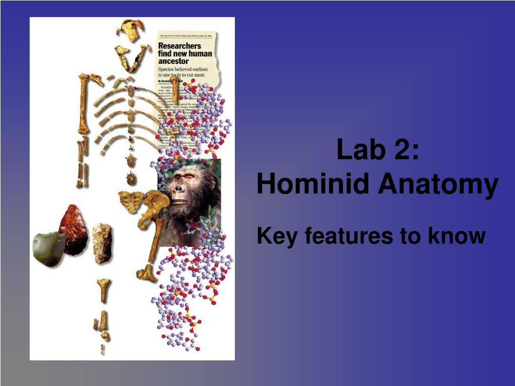 lab 2 hominid anatomy l.