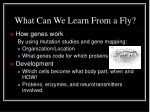what can we learn from a fly