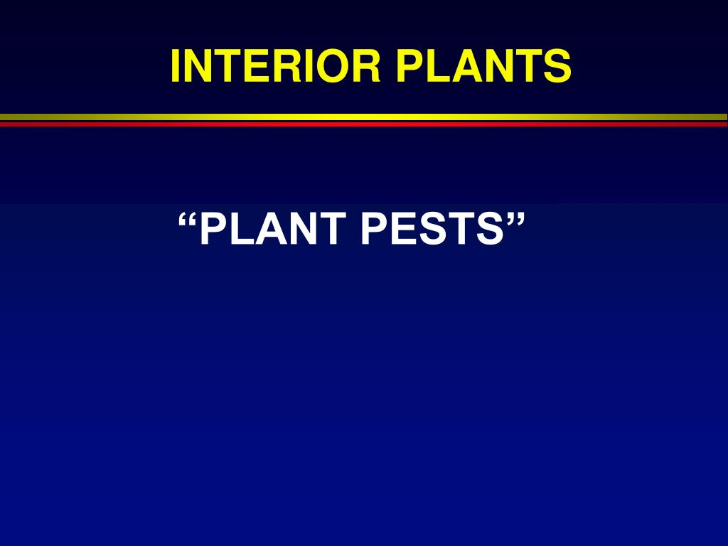 plant pests l.