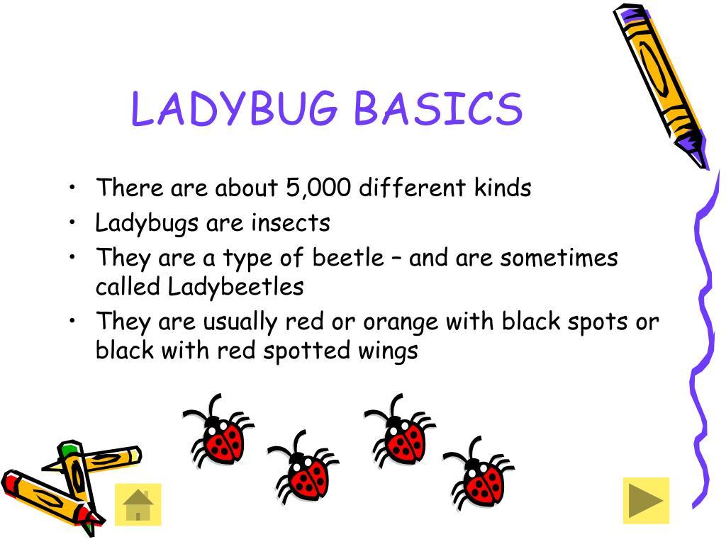 LADYBUG BASICS