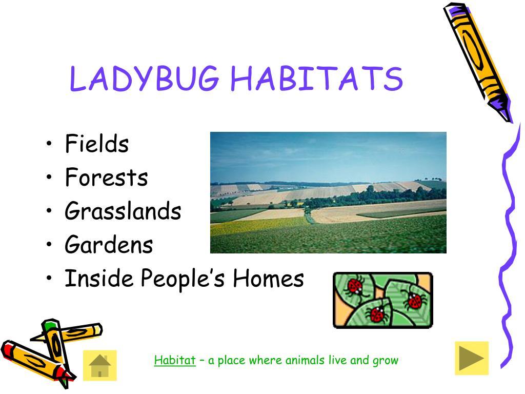 LADYBUG HABITATS