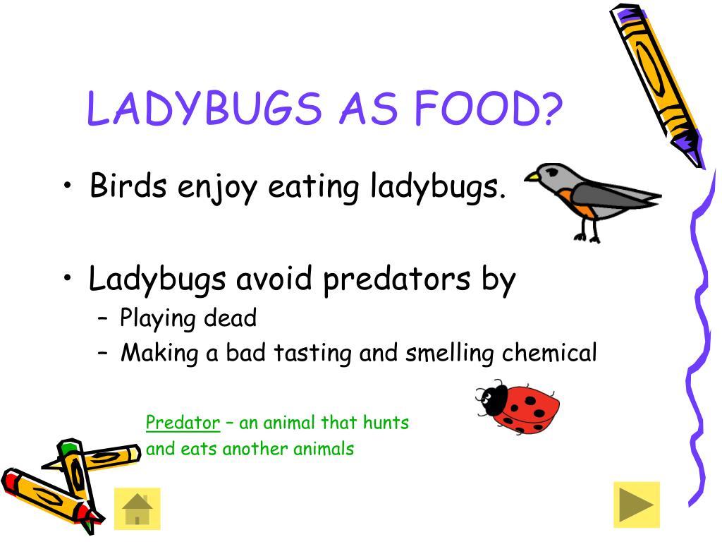 LADYBUGS AS FOOD?