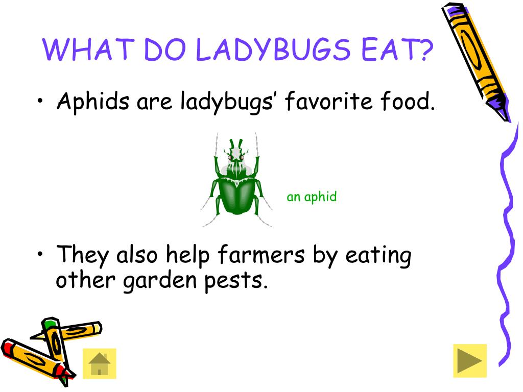 WHAT DO LADYBUGS EAT?