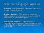 brain and language aphasia