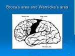 broca s area and wernicke s area